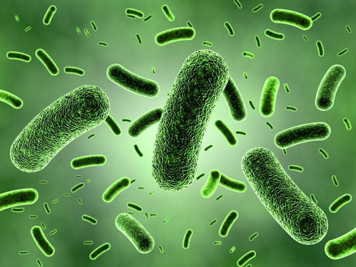 Vi khuẩn nấm mốc là một trong những nguyên nhân gây mùi của điều hòa Daikin